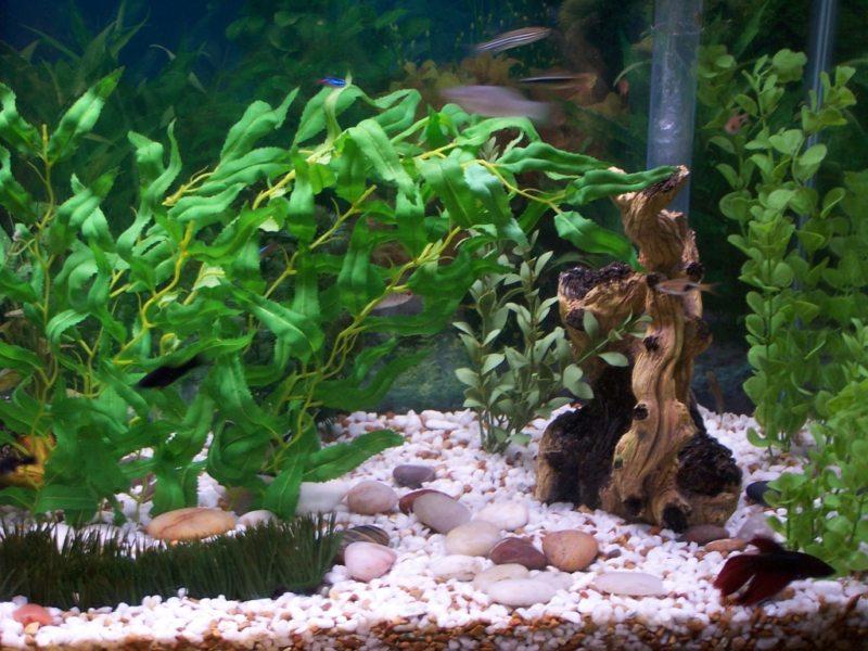 Оформление аквариума (1)