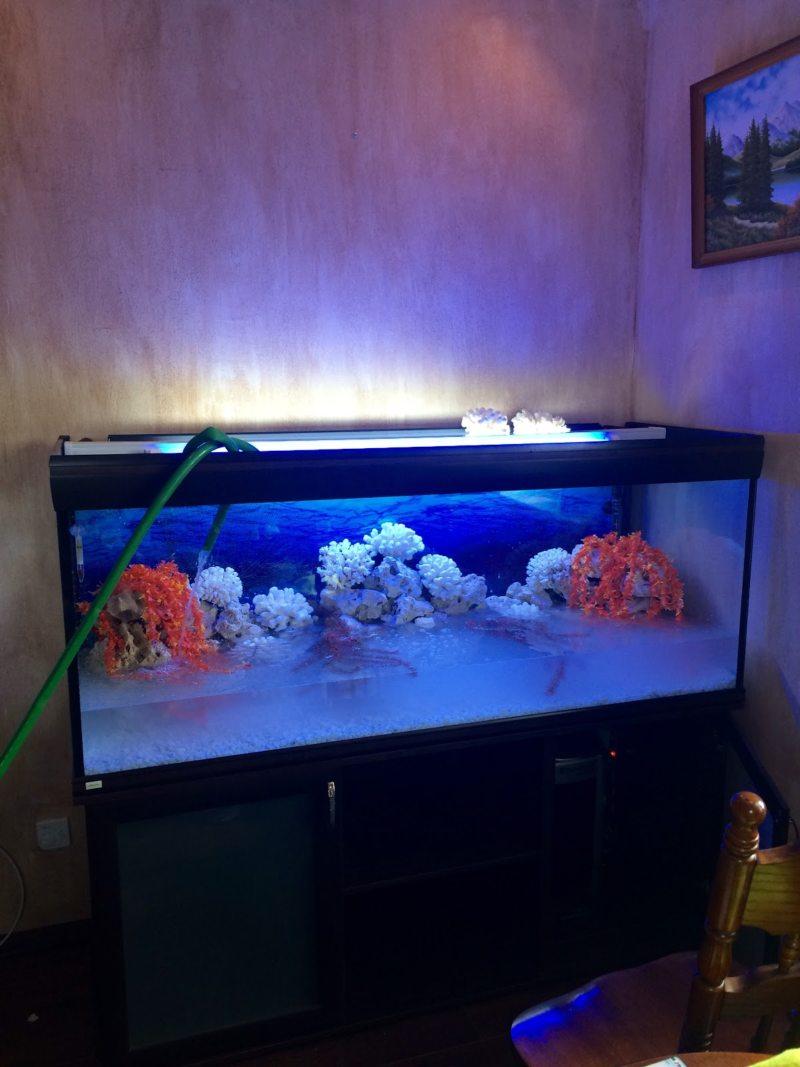 Оформление аквариума (12)