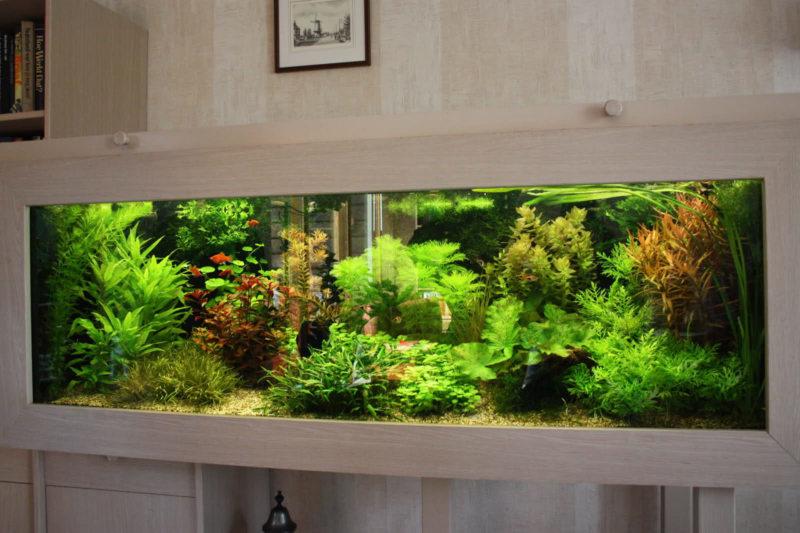 Оформление аквариума (18)