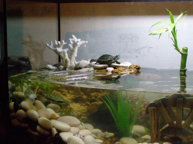 Оформление аквариума (20)