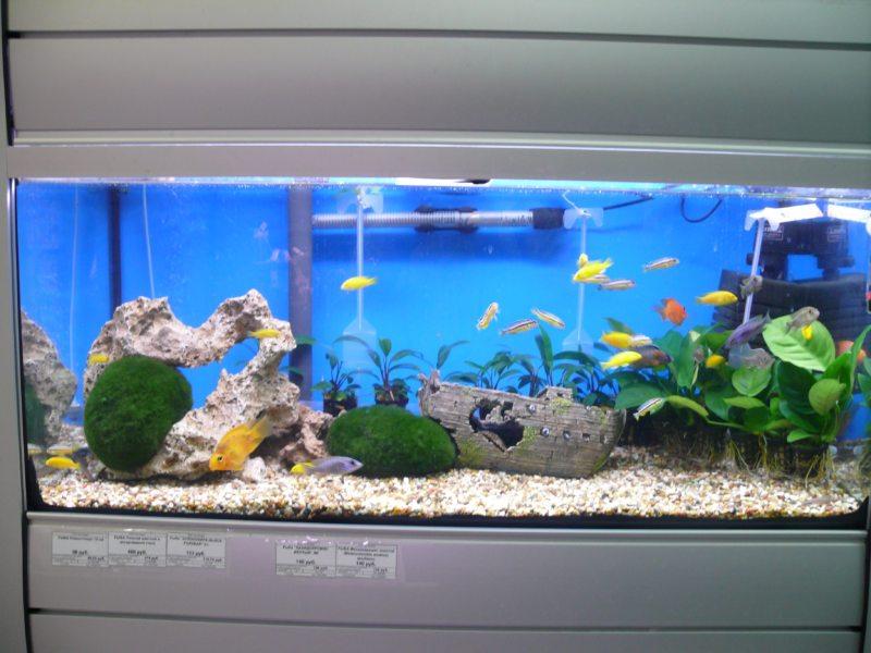 Оформление аквариума (25)