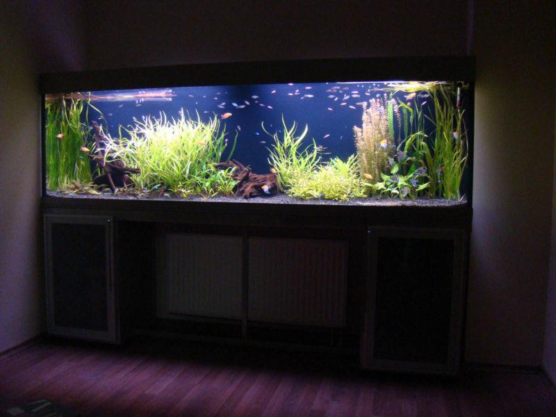 Оформление аквариума (28)