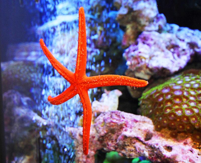 Оформление аквариума (31)
