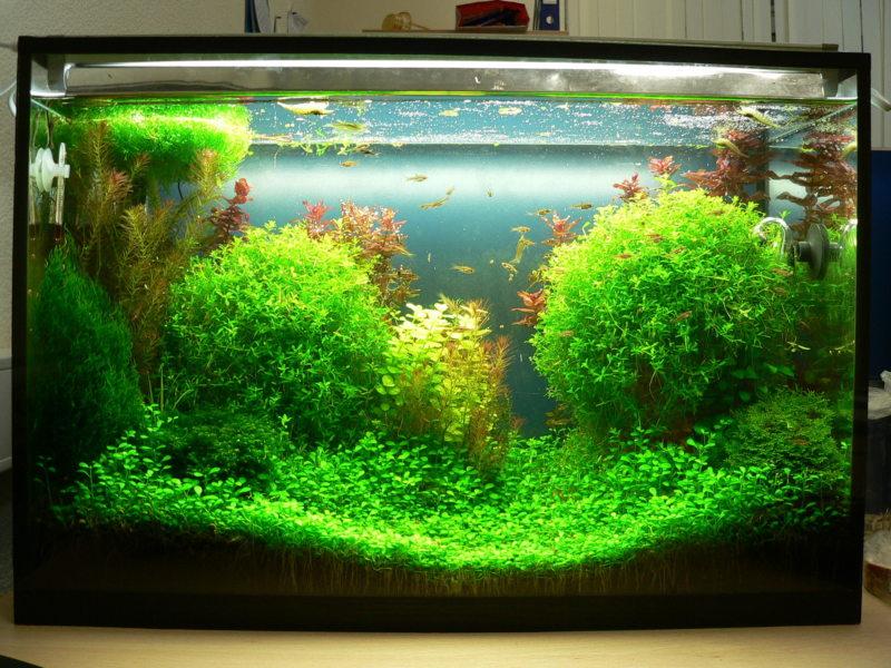 Оформление аквариума (32)