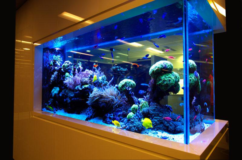 Оформление аквариума (6)