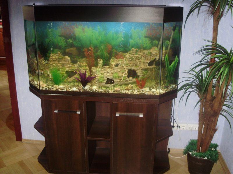 Оформление аквариума (7)