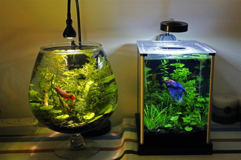Самые необычные аквариумы (01)