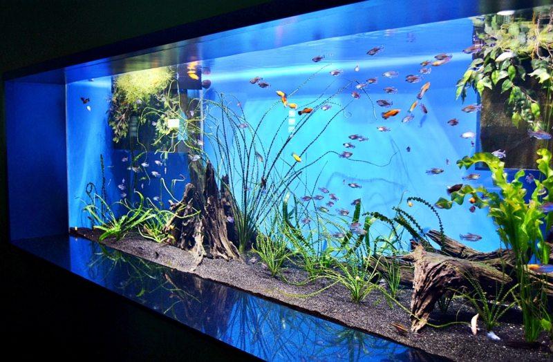 Самые необычные аквариумы (1)