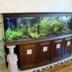 Самые необычные аквариумы (10)