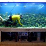 Самые необычные аквариумы (13)