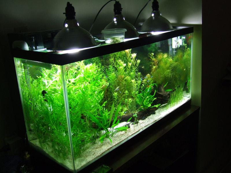 Самые необычные аквариумы (14)