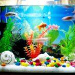 Самые необычные аквариумы (15)