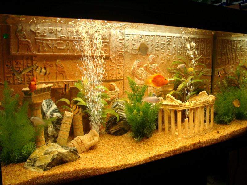 Самые необычные аквариумы (16)