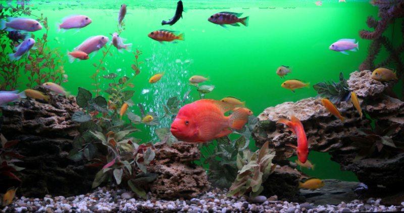 Самые необычные аквариумы (20)