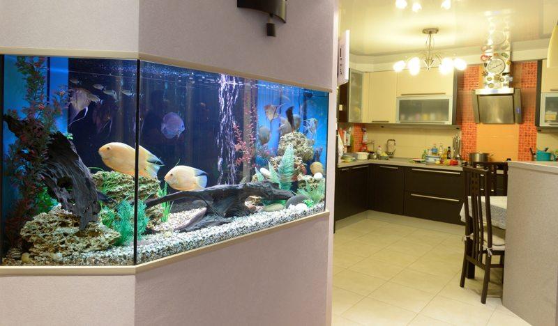 Самые необычные аквариумы (24)