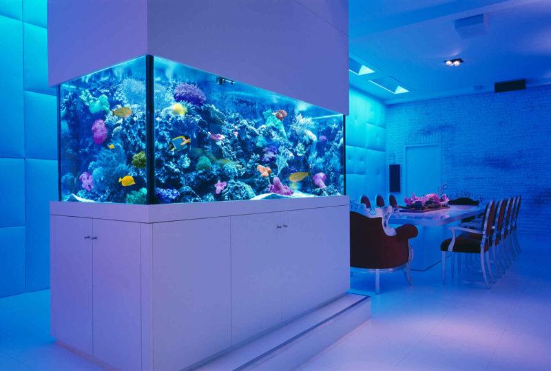Самые необычные аквариумы (5)