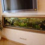 Самые необычные аквариумы (6)