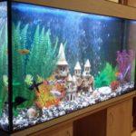 Самые необычные аквариумы (9)
